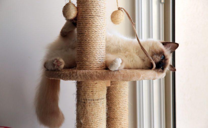 Macskabútor otthonra