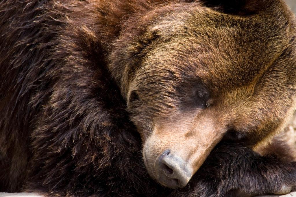 Bizonyos állatok télen téli álmot alszanak.