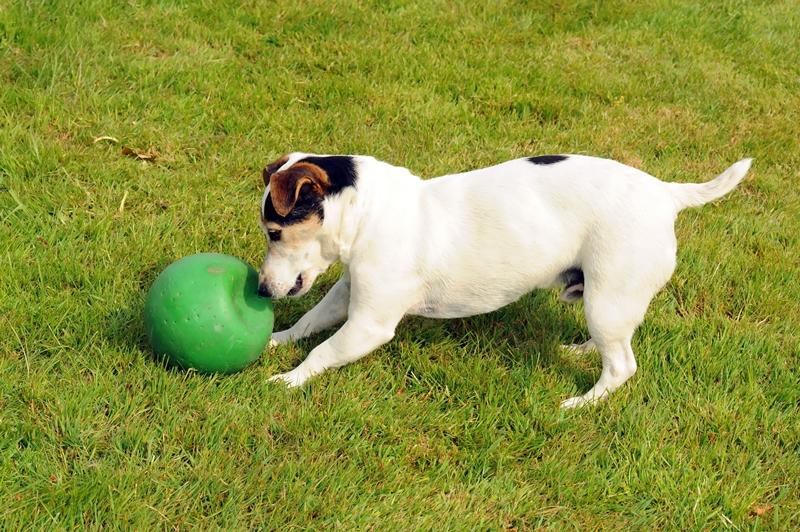A kutyák szeretnek a gazdikkal játszani.